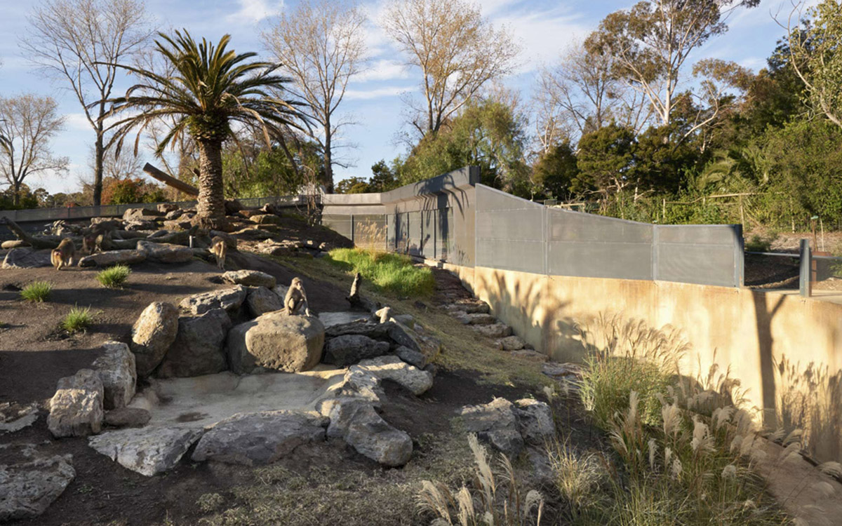 Method-Projects-Internal-landscape-melbourne-zoo-3